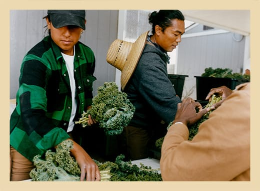 Isabella, Farm Manager, and Richard, Co-Founder, prepare kale for a food bank delivery.
