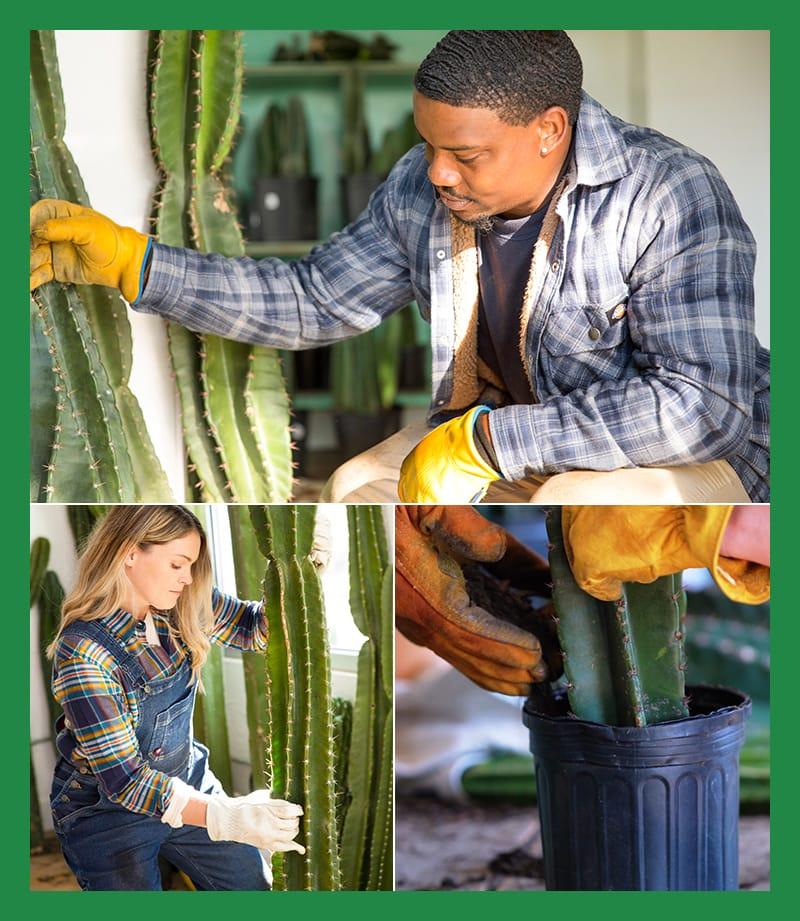 Ils vendent aussi des semis et des cactus spéciaux.
